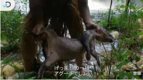 動物の死骸を発見